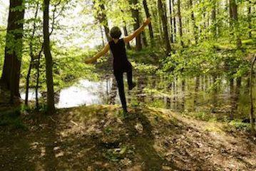 Kaha Kranich Wald